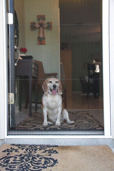 Bottom-Rail-of-the-Plisse-Retractable-Door-Screen-with-Dog