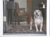 Retractable Screen Pet Friendly