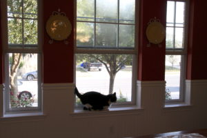 Plisse Retractable Screens and Cats- No need to worry!