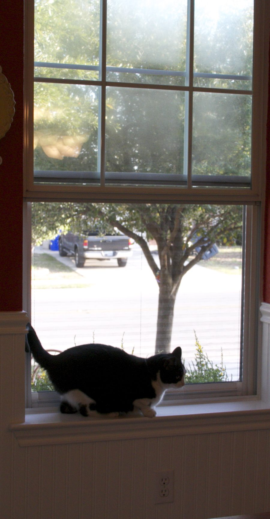 Plisse Retractable Screen Keeps Cat In