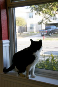 Cat Proof Retractable Screen Door As Shown By Photo Of Lexie The Cat  Looking Out