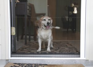 Plisse retractable screens and cats - or sometimes dogs.